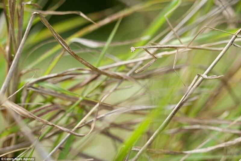 Богомол: описание, виды, фото, где живет