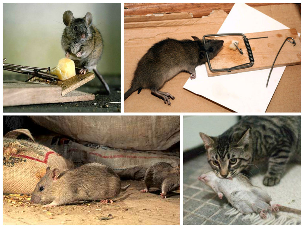 Топ-10 лучших средств от мышей и крыс в доме
