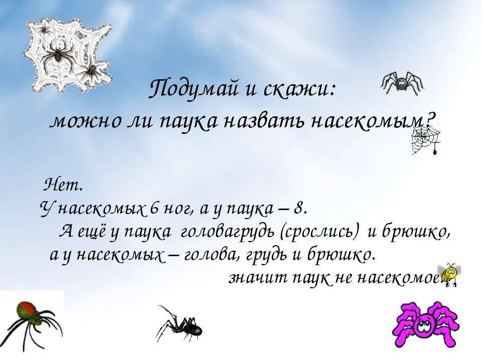 Видеть наяву паука: к чему эта встреча, народные приметы и суеверия
