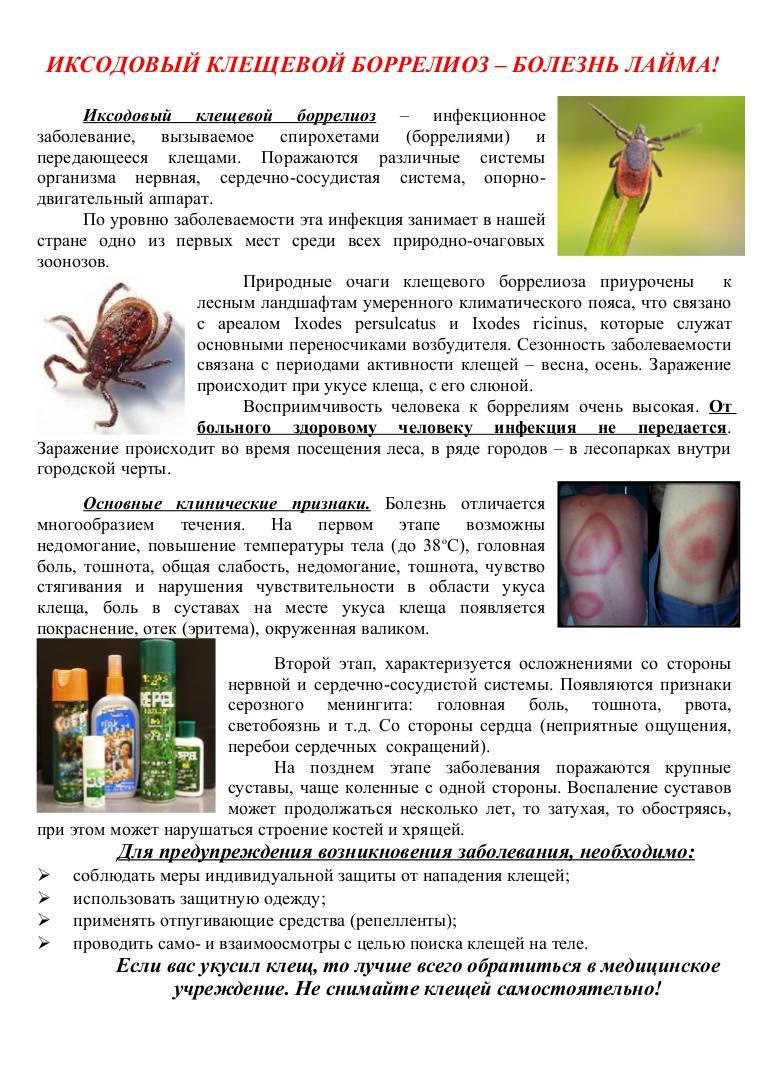 Болезнь лайма, клещевой боррелиоз – симптомы, лечение, последствия, профилактика