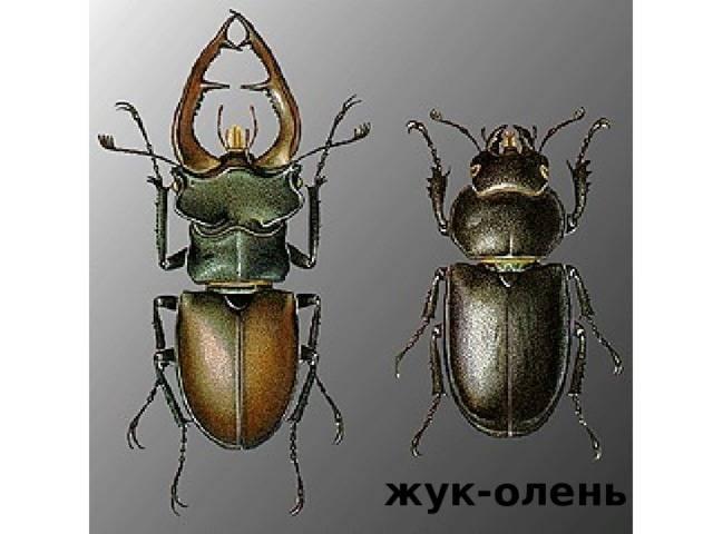 Класс насекомые: представители, харатеристика, строение / справочник :: бингоскул