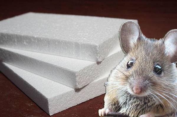 Будут ли мыши есть пенопласт