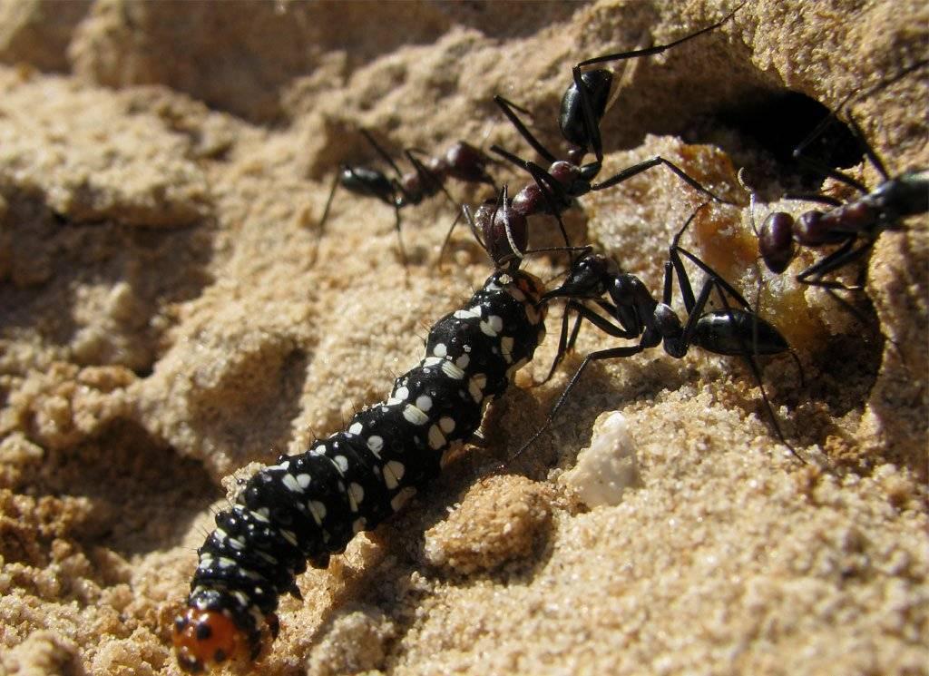 К чему снятся муравьи – значение сна, толкование по сонникам
