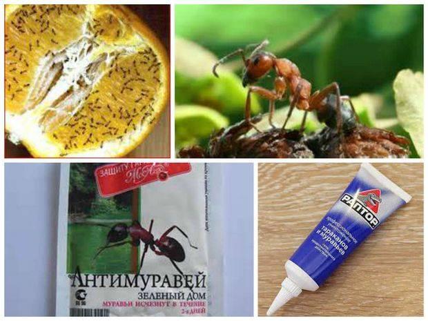 Как выбрать лучшее средство от муравьев в квартире