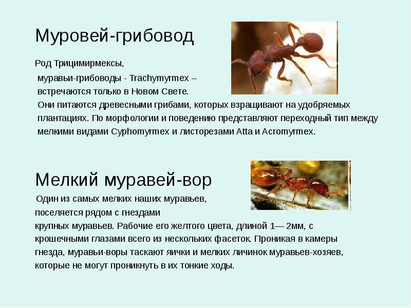 Какую пользу приносят муравьи лесу и людям