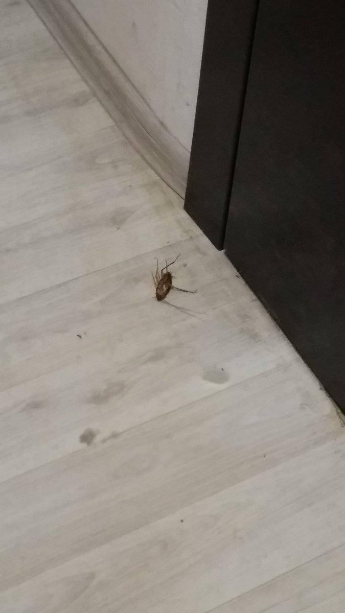 Как вывести тараканов в общежитии: химические средства и народные методы