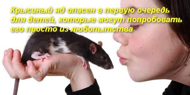 Отравление крысиным ядом: первые признаки и все симптомы. как оказать первую помощь при отравлении крысиным ядом - автор екатерина данилова - журнал женское мнение