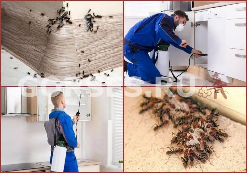 Как избавиться от муравьев в доме навсегда - эффективные способы и советы