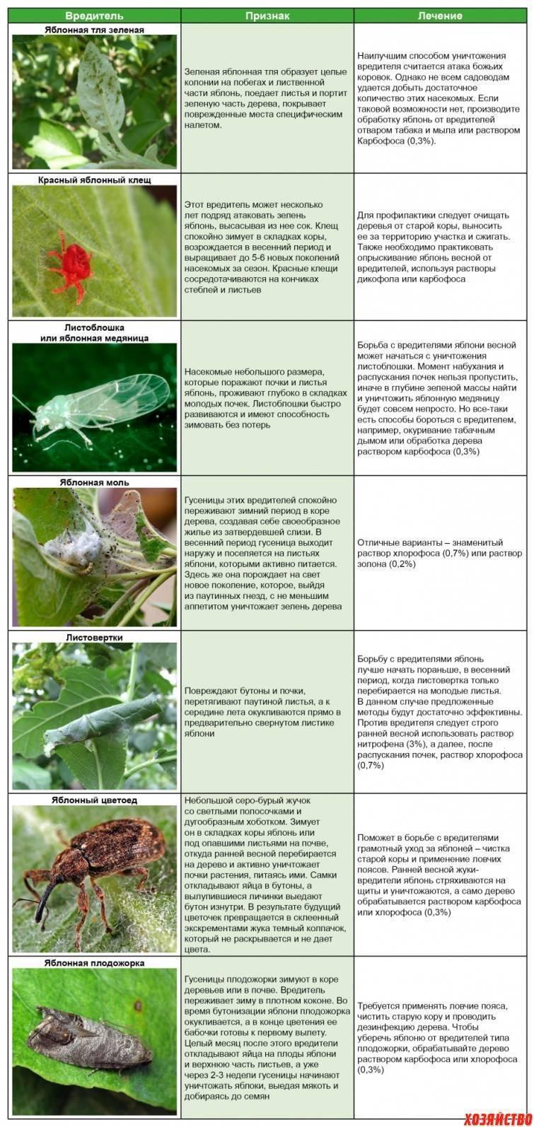 Методыборьбы с тлей на плодовых деревьях: средства и препараты