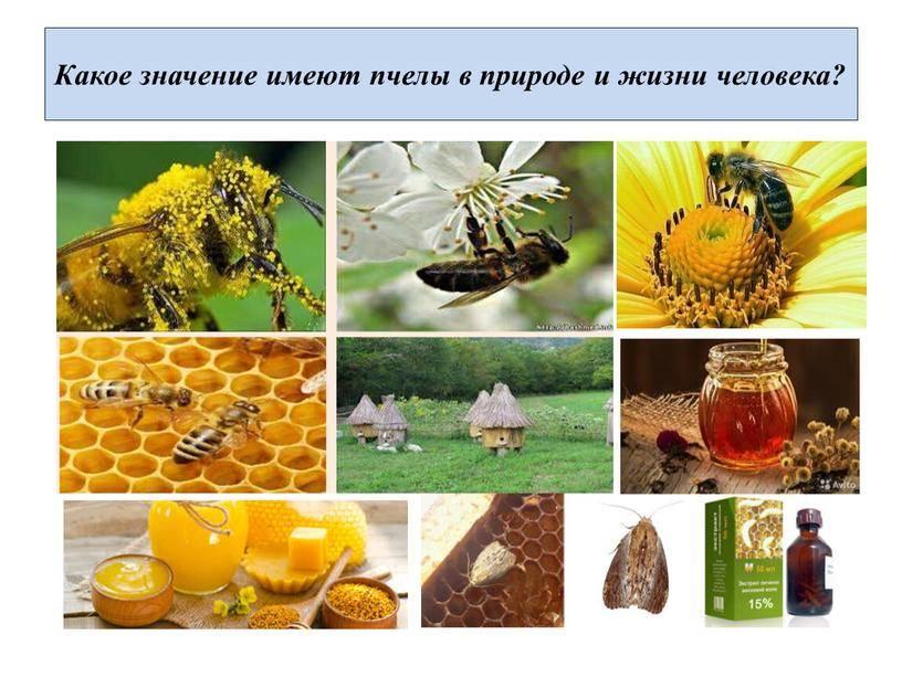 Как пчелы делают мед и что такое соты