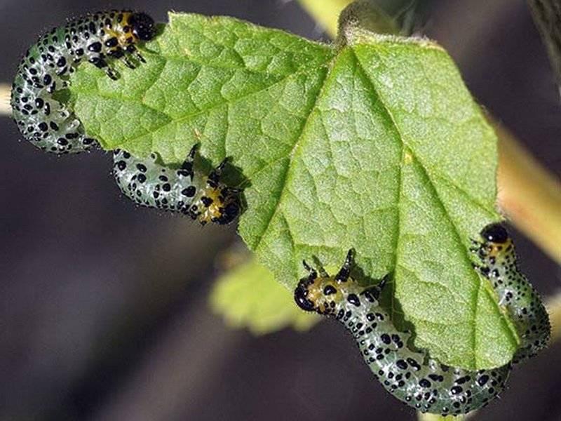 Средства от гусениц на деревьях и цветах