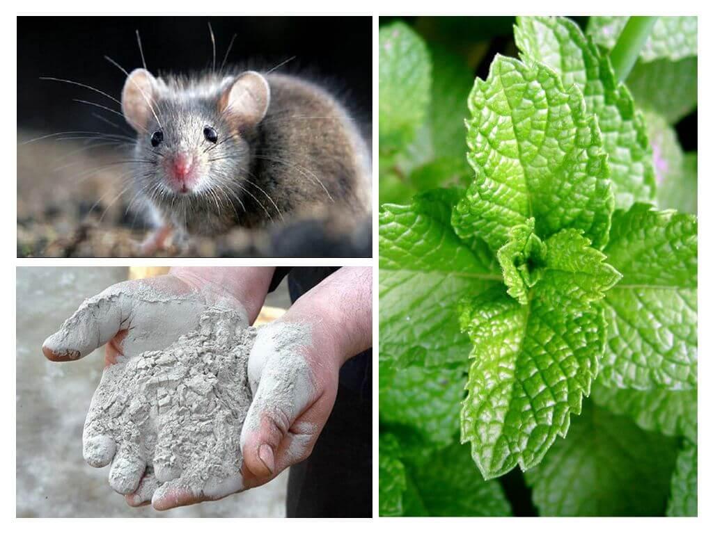 Как избавиться от мышей народными средствами