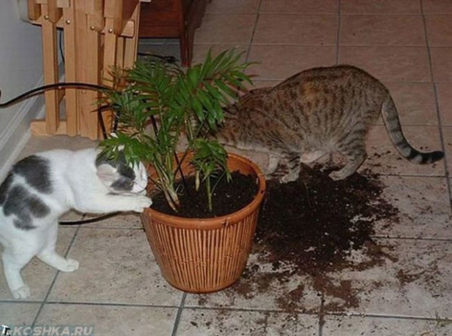 Если кот съел муху — какие могут быть последствия