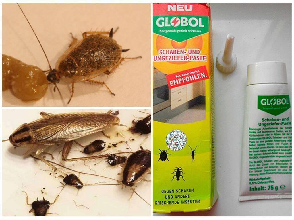 Средство globol от тараканов