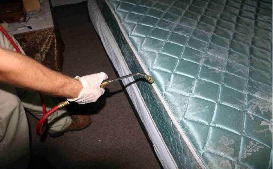 Как избавиться от клопов в квартире в домашних условиях: практические рекомендации