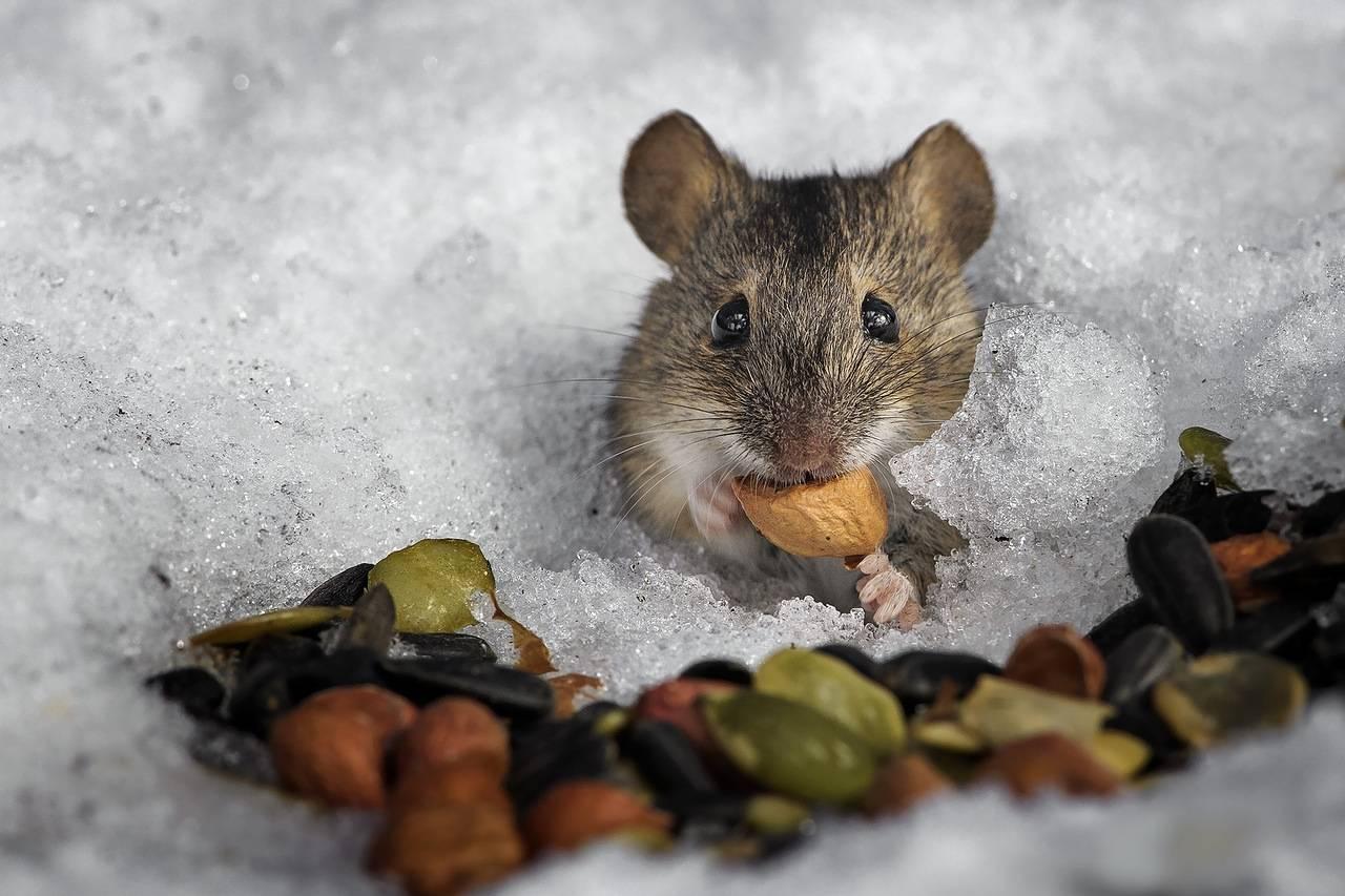 Где живут летучие мыши зимой. там где зимуют летучие мыши | дачная жизнь