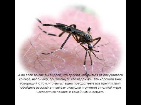 К чему снится комар. видеть во сне комар - сонник дома солнца