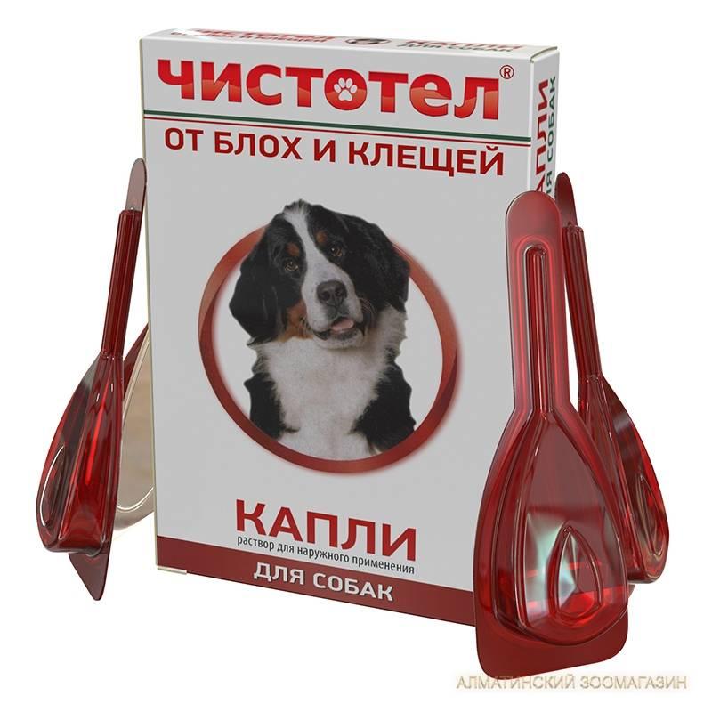 Капли чистотел от блох и клещей для собак: инструкция по применению, состав, дозировка, применение, аналоги