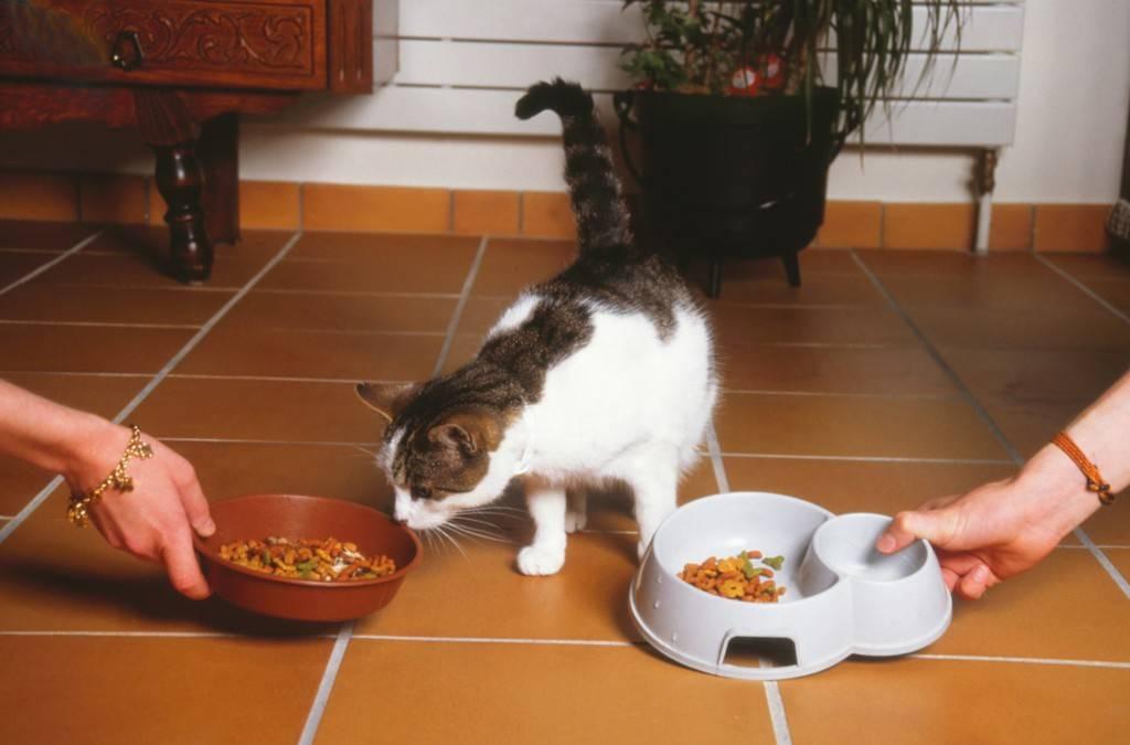 В каких случаях и как кошки могут потерять нюх?