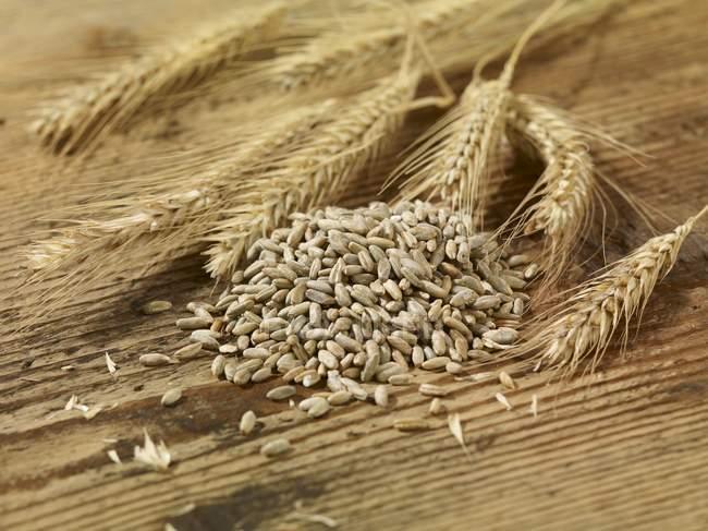 Пищевая моль: как избавиться, средства