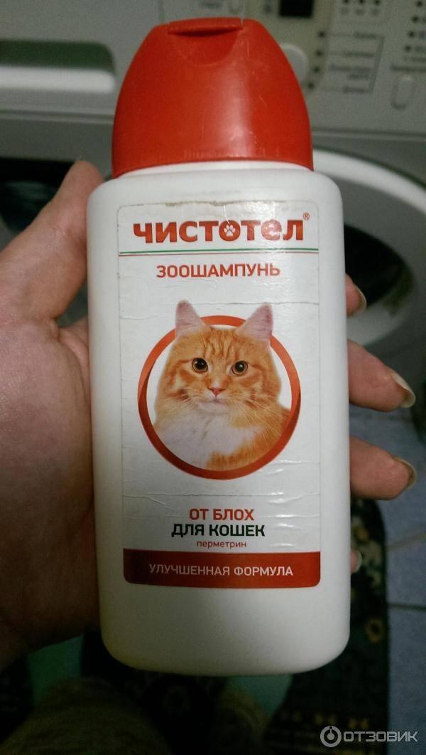 Как вывести блох у котенка от 2 дней и старше в домашних условиях: эффективные спреи, капли, шампуни, ошейники