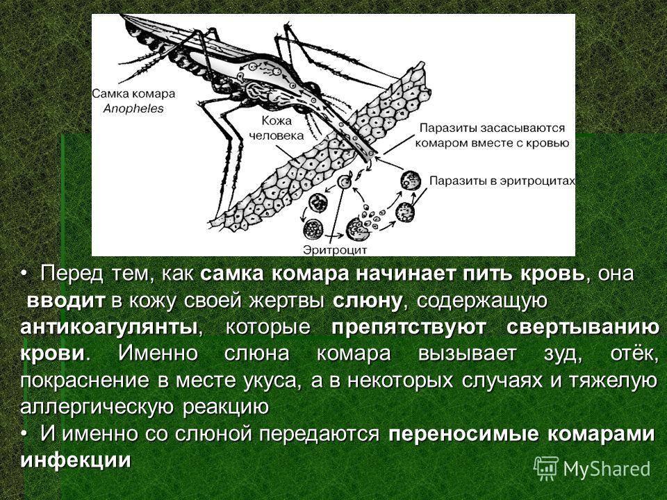 Зачем в природе нужны комары, какую пользу они приносят