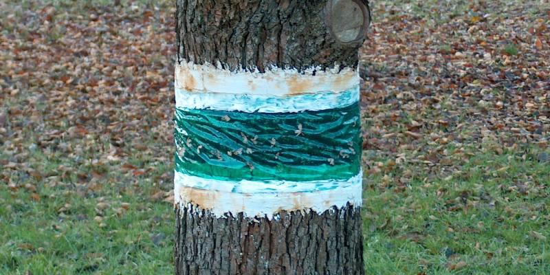 Как изготовить ловчий пояс для деревьев: делаем своими руками