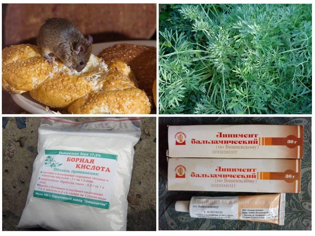 Как навсегда избавиться от крыс и мышей в частном доме народными средствами