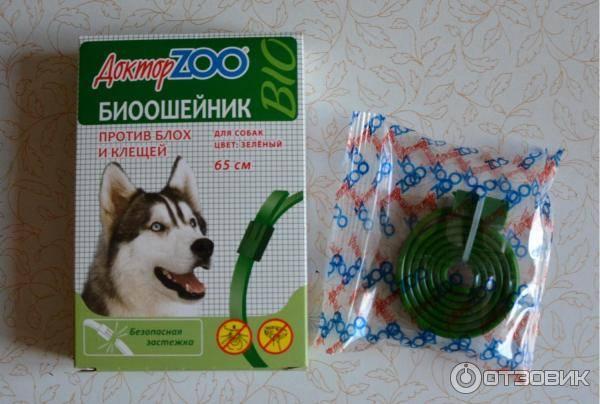 Как вывести блох у щенка