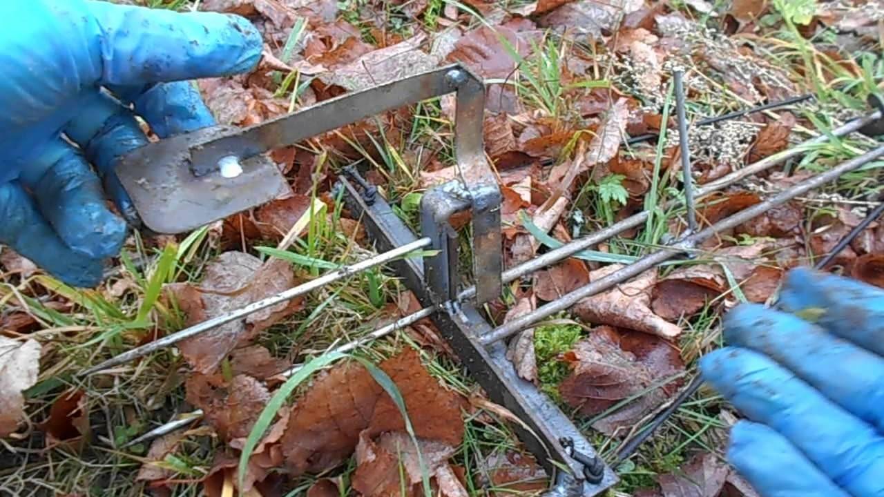 Как поймать крота в огороде или на дачном участке и стоит ли применять рыболовный крючок