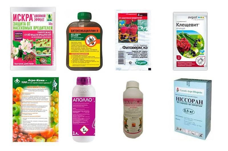 Средство от клещей: спрей, препараты, антибиотик - что эффективнее?