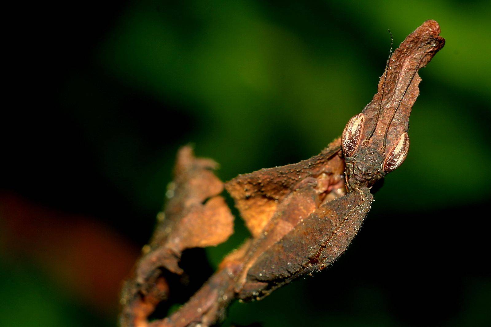 Мастер маскировки насекомые и животные | интересный сайт