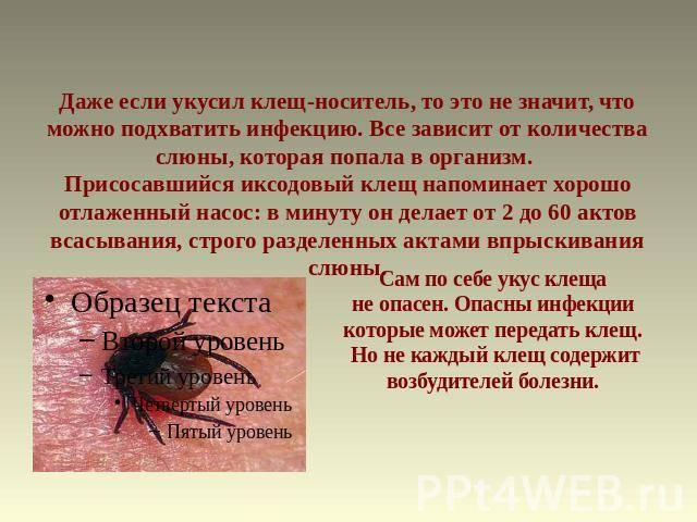 Можно ли заразиться, если клещ прополз по телу