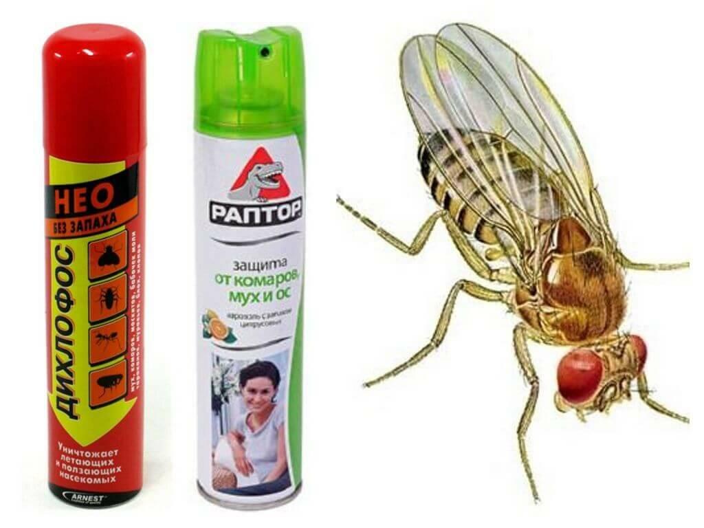 Как избавиться от комаров в квартире, доме или подвале - народные средства и другие способы борьбы