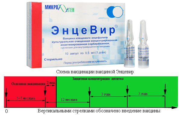 Прививка от клещевого энцефалита побочные эффекты