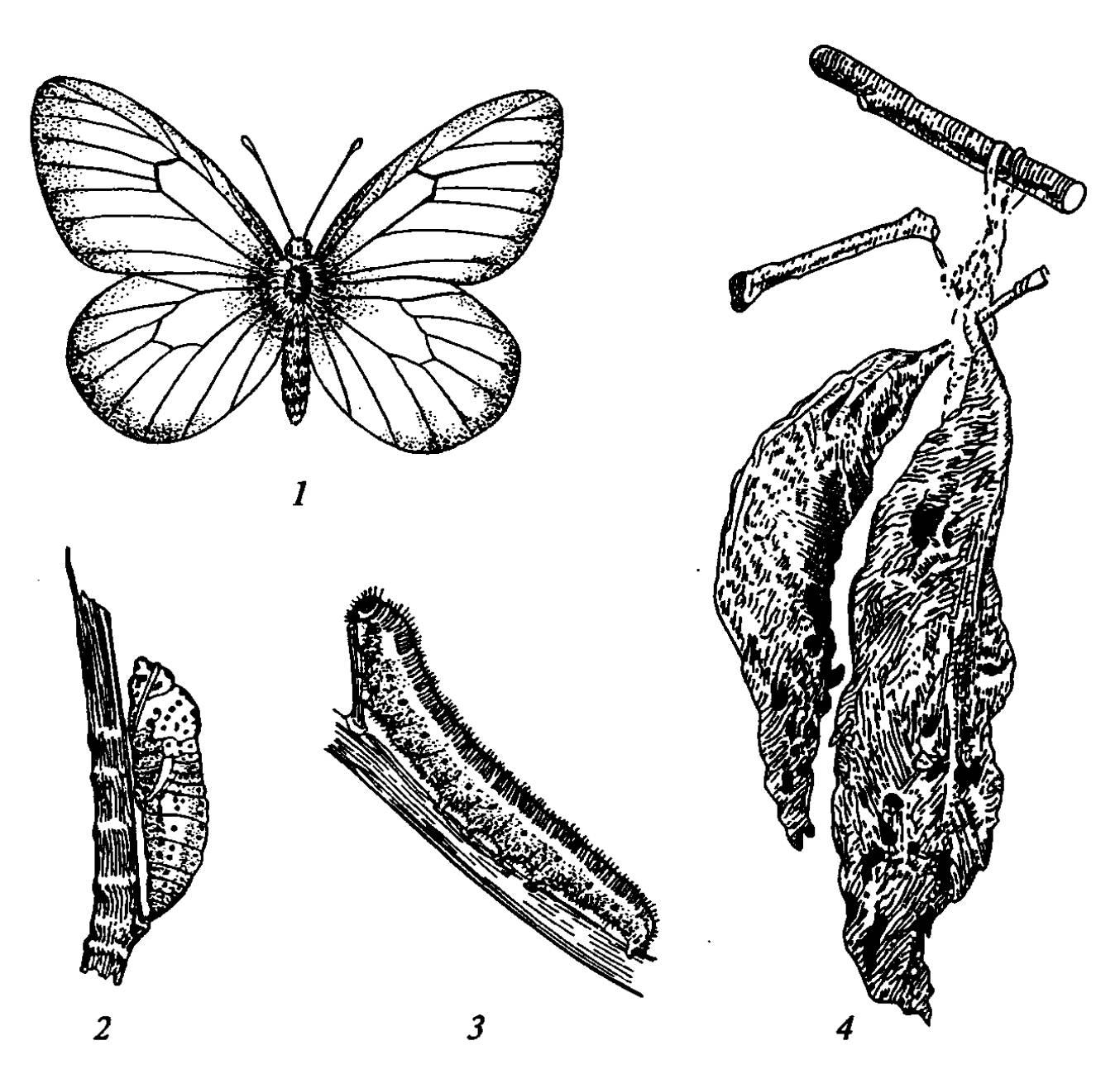 Насекомые-вредители сада и огорода: фото, названия, описание, защита растений эффективными способами