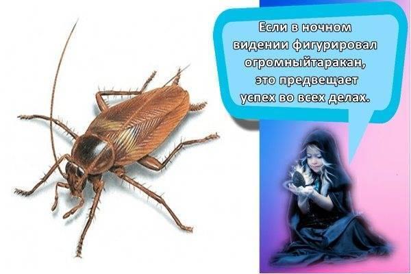 К чему снятся живые тараканы в квартире?