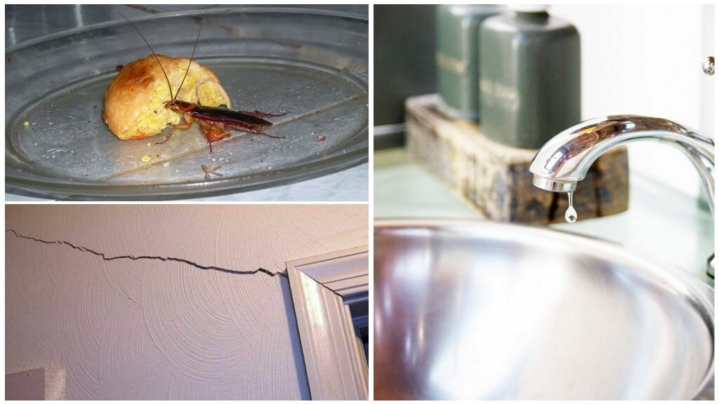 Откуда берутся и от чего появляются тараканы в квартире?