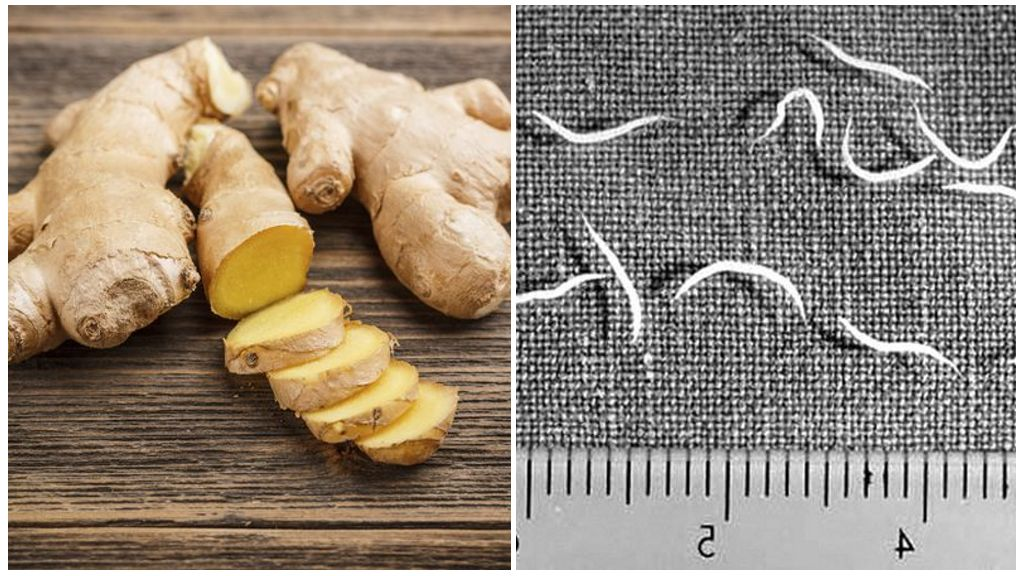 Народные средства от глистов и паразитов у человека широкого спектра действия | народная медицина