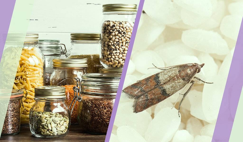 Как избавиться от пищевой моли народными средствами
