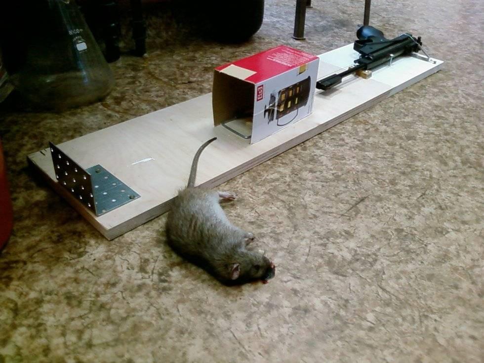 Как поймать мышь в доме и квартире без мышеловки
