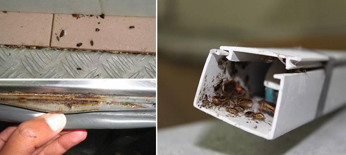 Откуда появляются тараканы в квартире и что с этим делать