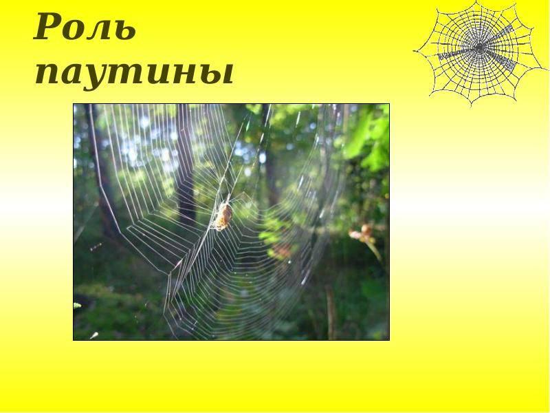 Паутина пауков | энциклопедия домашних животных
