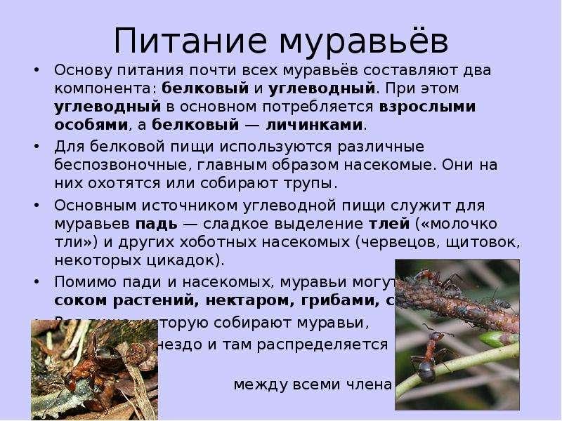 Чем питаются осы – рацион взрослых особей и личинок