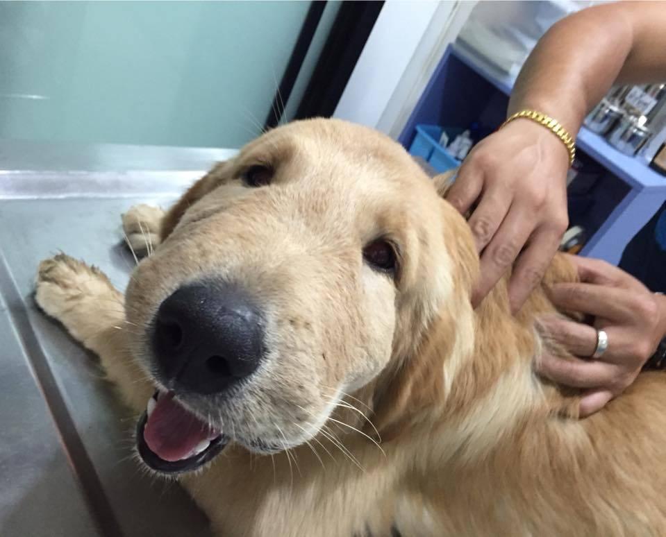Собаку укусила пчела или оса