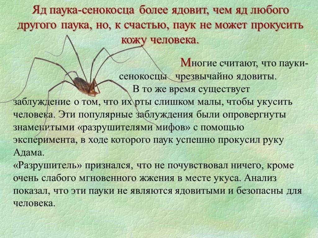 Интересные факты о пауках, строение тела, среда обитания, виды, питание, размножение – удивительные факты