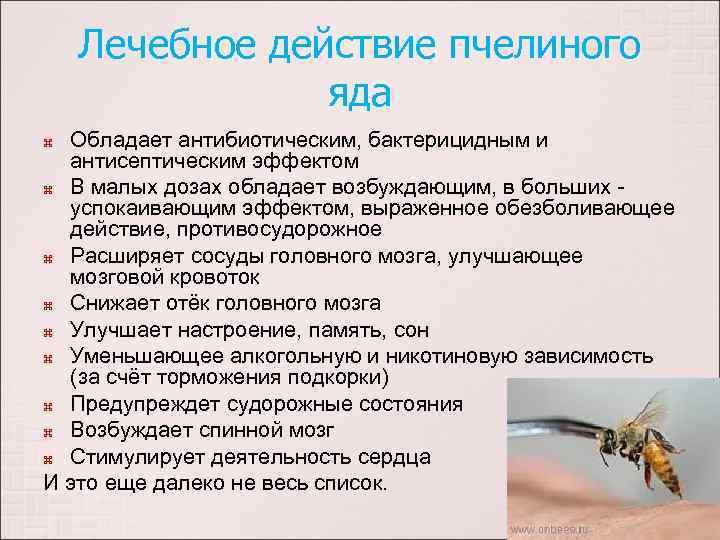 Пчелиный яд лечебные свойства и противопоказания