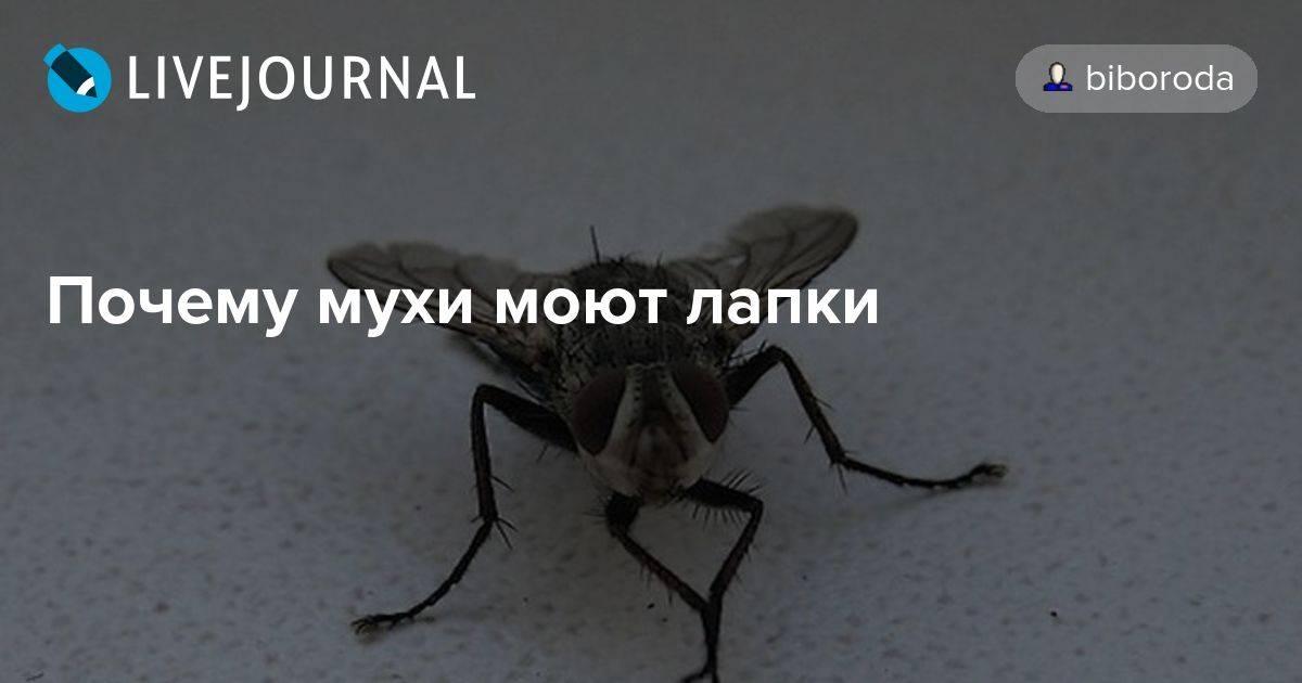 Для чего мухи потирают лапками? факты о мухах