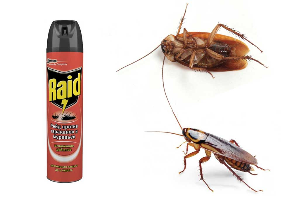 «Дихлофос» от тараканов: эффективность, проверенная годами, или дань традициям?