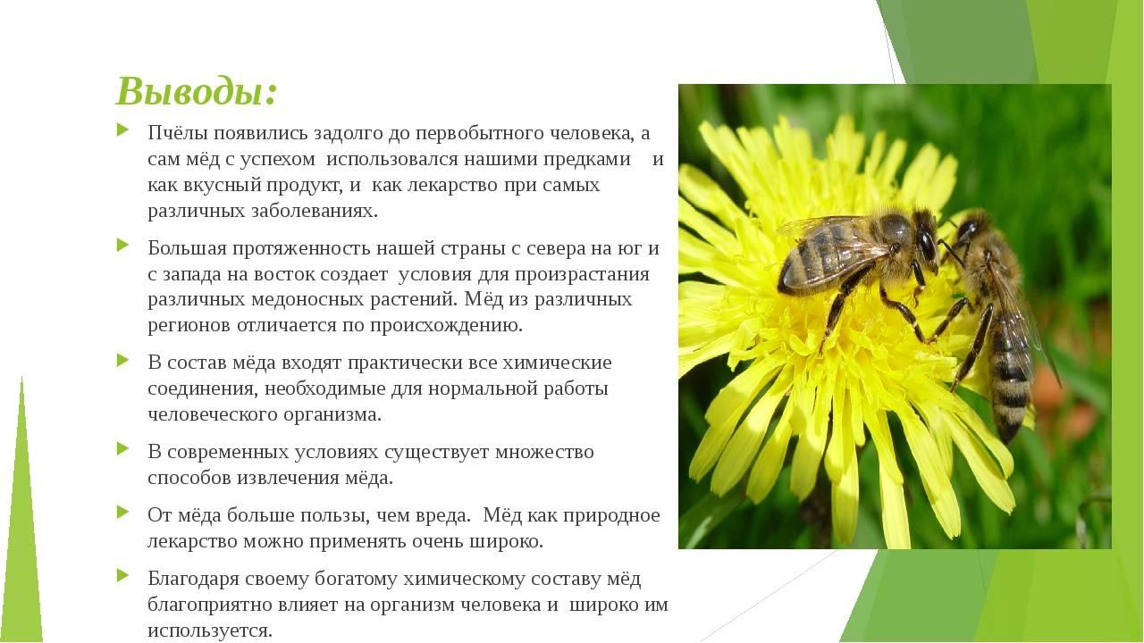 Продолжительность жизни пчел